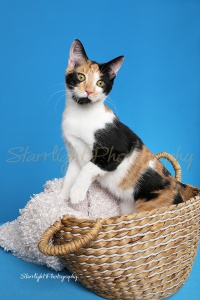 Household Pet, Haleigh