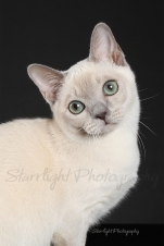 Jaslyn, Tonkinese owned by Carolyn Rennie and Sarah Hoops
